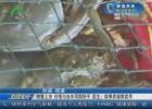 螃蟹上市  价格与去年同期持平  医生:体寒者谨慎食用