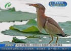 两名女孩路边捡到一只受伤的小鸟 原是国家二级保护动物黄苇鳽