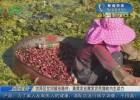 【走向我们的小康生活】洪泽区岔河镇东陈村:高效农业激发农民增收内生动力