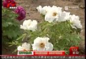 赏牡丹何必去洛阳——淮安首次引种3000余株牡丹获得成功
