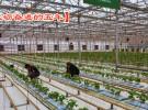 大力推进科技下乡入户  全面促进农村产业升级