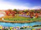 白马湖森林公园150亩菊花园菊花苗完成种植