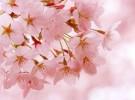 春暖花开  踏青赏景好时节