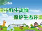 讲文明树新风 公益广告《保护野生动物 保护生态环境》
