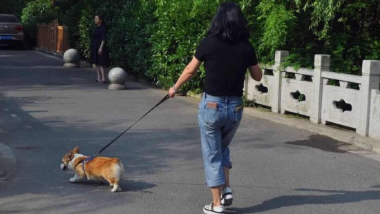 淮安出台养犬新规 文明养犬还需加力