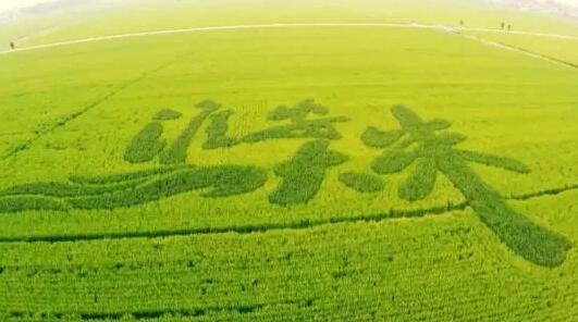 从温饱到品质的嬗变  粮食变迁折射时代发展