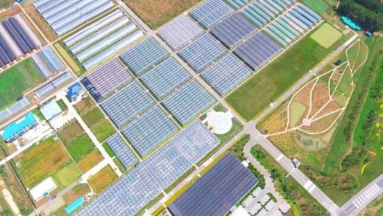 【厉害了,淮安】这个亚洲最大生产基地,蝴蝶兰销量顶上一个国家!