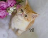 《小加菲猫》