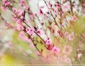 《春天里》